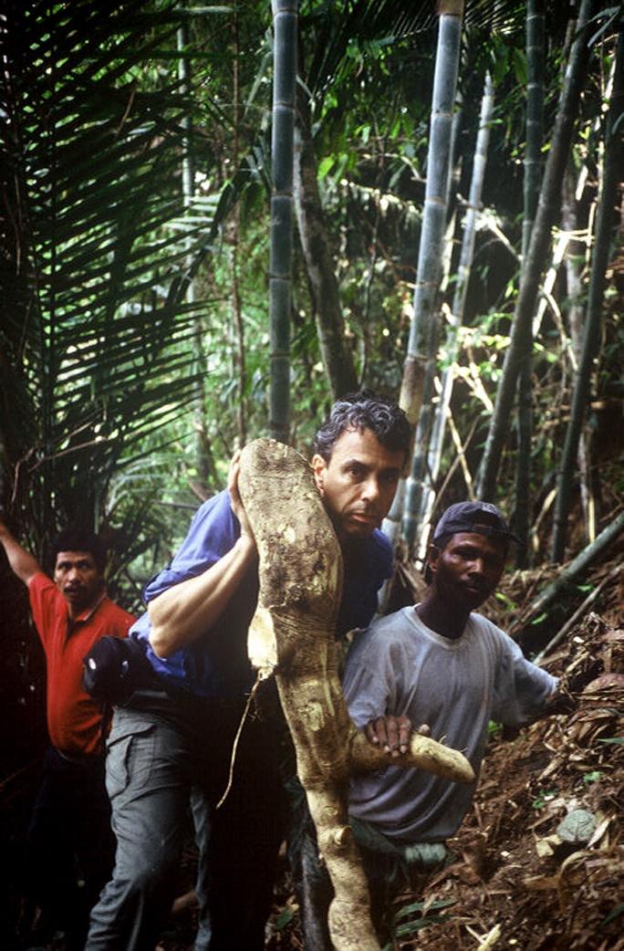 chris and orang asli harvest tongkat ali root medicine