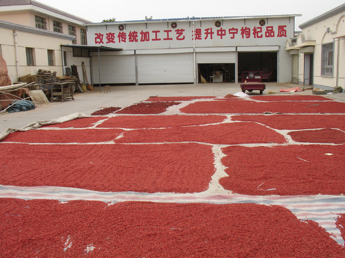 Goji Berries Laid Out to Dry | Medicine Hunter