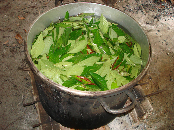 """an introduction to the drug ayahuasca """"the drug of choice for the age of kale"""" is how the new yorker described  ayahuasca last year in a lengthy piece that introduced the banned."""