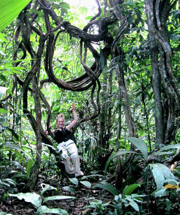 jungle vines Gallery