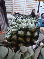Aloe Vera in a Peruvian Market