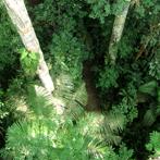Amazon Primary Rainforest