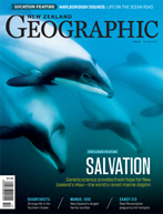 Maui Dolphin: Deep Trouble